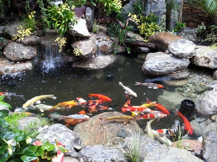 Bổ sung nước cho hồ cá koi khi cần thiết