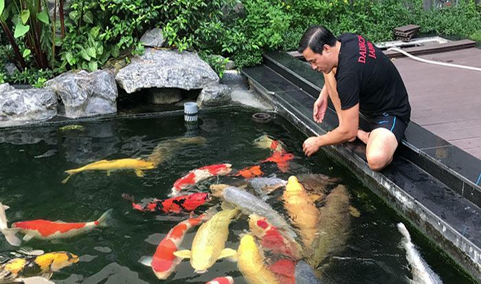 Cận cảnh đàn cá koi khủng của đại gia ở TP HCM