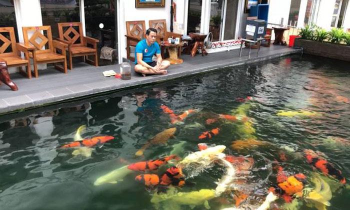 Cho cá koi ăn là một thú vui thư giãn hiệu quả