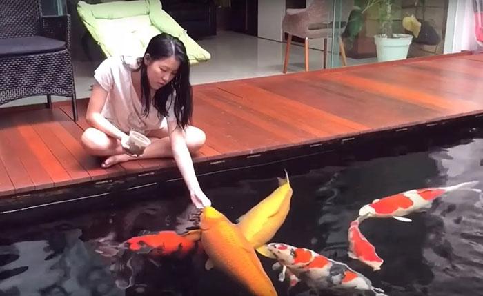 Mỗi lần chỉ nên cho cá koi ăn một ít lượng thức ăn