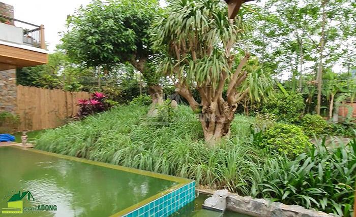 Thi công sân vườn biệt thự tại Bình Dương view 10