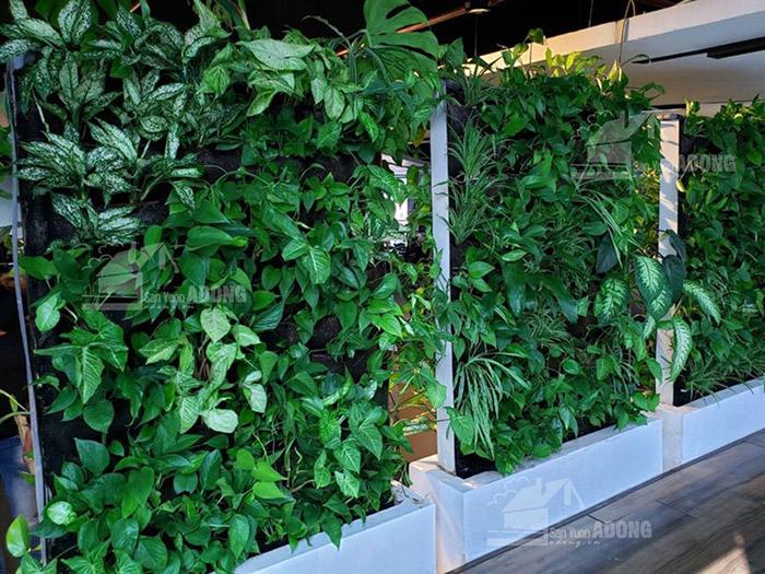 Thi vườn tường đứng văn phòng làm việc công ty