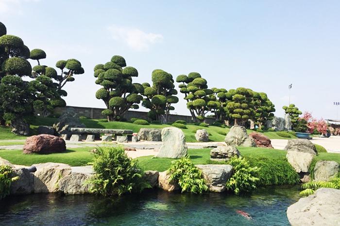 cay bonsai trong cong vien ca koi rin rin park